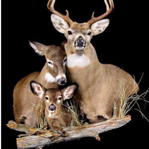cropped-deer-patriarchy.jpg